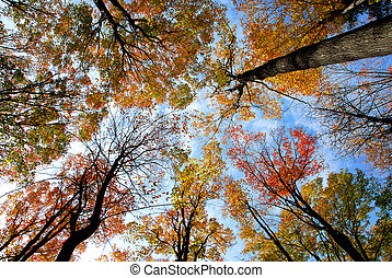Tops of colorful fall trees on blue sky background