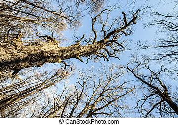 Treetops View Photo