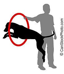 treinamento, cão