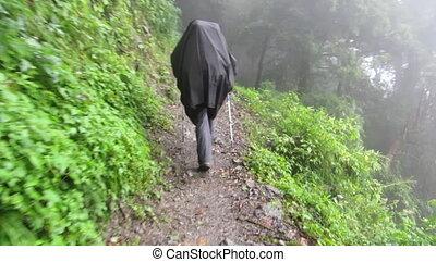 trekker, in, regenmantel, wandern, in, der, dschungel