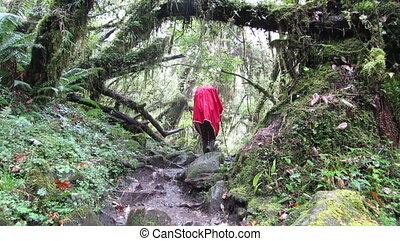 trekker, in, regenmantel, wandern, in, der, jungle.,...