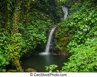 Trekkin tour in the near of Monteverde, Costa Rica