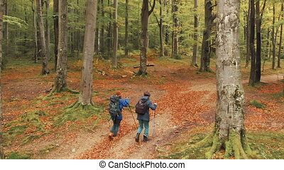 Trekking in Fall Forest - Couple of friends going trekking...