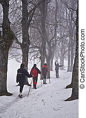 Trekking in the snow - An image of a group of people walking...