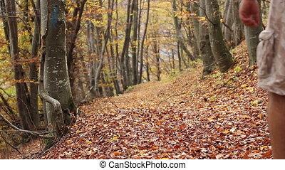 Trekking Through Autumn Forest - A man with cargo short...