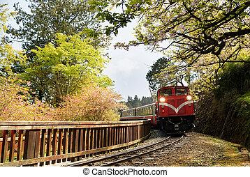 trem, floresta