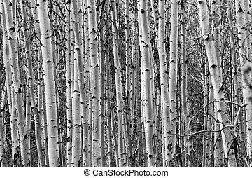 tremble, arbres, fond