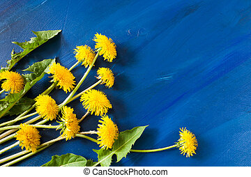 Trendy blue diagonal painted background with copy space and bunch of yellow dandelions with green carven leaves lying on it. Summer concept.