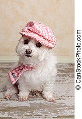 trendy, cute, cão