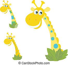 tres, amarillo, jirafa, cabezas, aislado