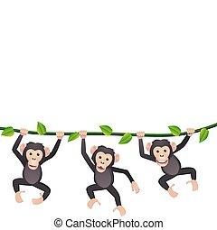 tres, chimpancé
