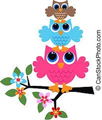 tres, colorido, búhos