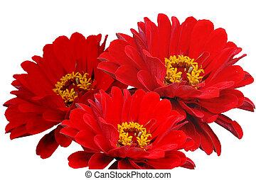 tres, flores
