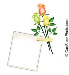 tres, hermoso, rosas, con, blanco, foto encuadra