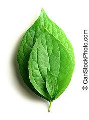 tres hojas