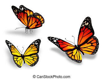 tres, mariposa amarilla, aislado, blanco, plano de fondo