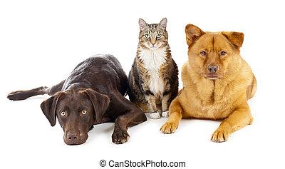 tres, mascotas, juntos