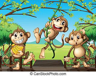 tres, monos, en, el, puente de madera