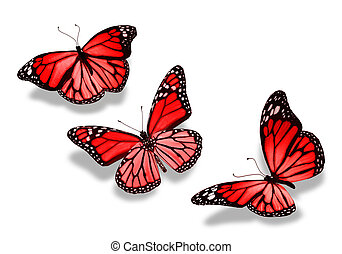 tres, rojo, mariposas