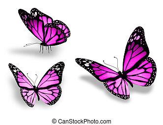 tres, violeta, mariposa, aislado, blanco, plano de fondo