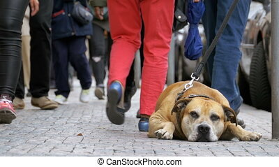 treu, unglücklich, hund, liegen, auf, der, bürgersteig, und,...