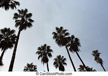 trevlig, palmträdar, scen