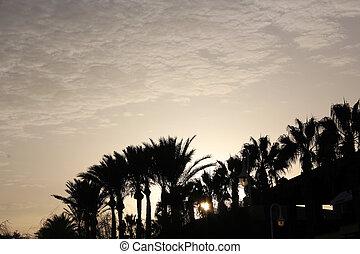 trevlig, solnedgång strand, scen