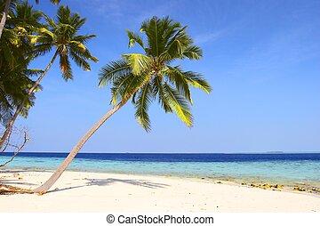 trevlig, strand, med, palmträdar