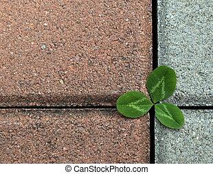 trevo, pavimento, pedra