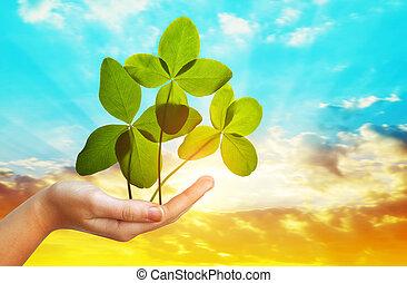 trevos, folha, sky., contra, mão, quatro, pôr do sol