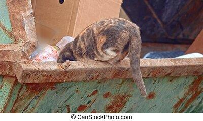 Calico cat eating something in garbage dumpster