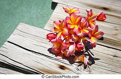 tri, color, frangipanis, por, el, piscina