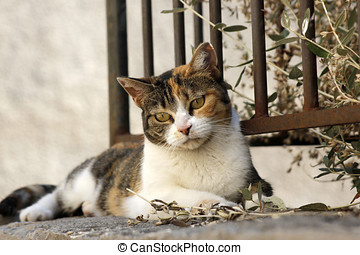tri-colored cat - A tri-colored street cat lying on a wall