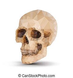 triangle human skull