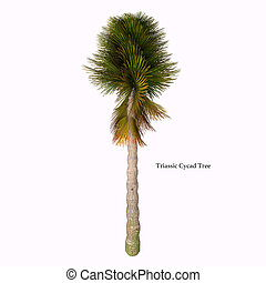 Triassic Cycad Tree - Cycad are seed plants with a long...