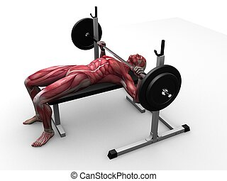 triceps, allenamento