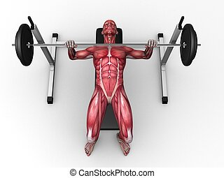 triceps workout - 3d rendered anatomy illustration of a male...