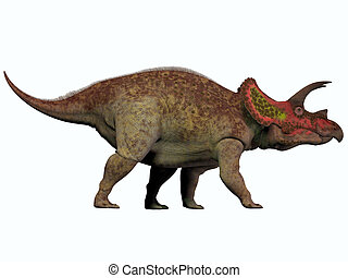Triceratops on White - Triceratops is a genus of herbivorous...