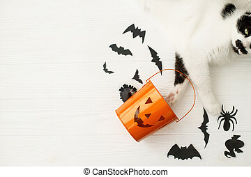 Trick or treat! Cat paws holding Jack o lantern candy pail on white background with bats and spider decorations, celebrating halloween at home. Top view with space for text.
