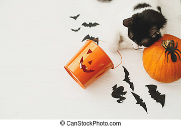 Trick or treat! Cat relaxing on pumpkin and Jack o lantern candy pail on white background with bats and spider decorations, celebrating halloween at home. Top view with space for text.
