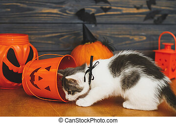 Trick or treat! Cute kitten playing at Jack o lantern candy bucket  on background of pumpkin with bats. Kitten posing at holiday decorations, celebrating halloween at home