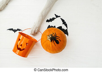 Trick or treat! Dog paw holding Jack o lantern candy pail on white background with pumpkin, bats and spider decorations, celebrating halloween at home. Top view with space for text.