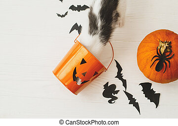 Trick or treat! Little kitten playing with Jack o lantern candy pail on white background with pumpkin, bats and spider decorations, celebrating halloween at home.