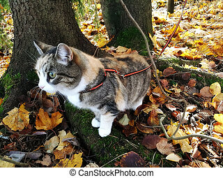 cat on a harness in autumn park