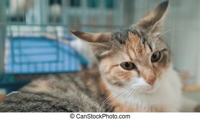tricolor cat sits in the background of the cage with a white...