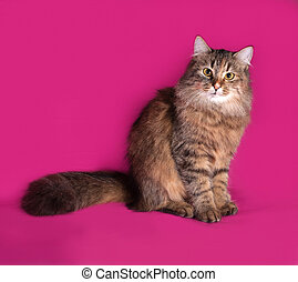 Tricolor cat sitting on pink