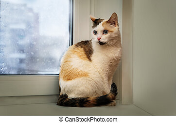 Tricolor young cat against the window