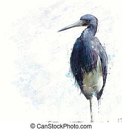 Tricolored Heron watercolor