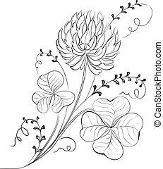 trifoglio, fiori, isolated.