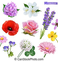 trifoglio, lavanda, papavero, gelsomino, set, lilla, flowers...